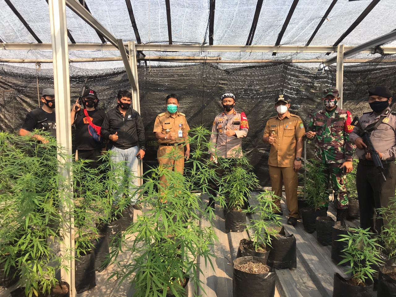 Nekat Berkebun Ganja, 2 Bersaudara Berurusan Dengan Resmob Unit Reskrim Polsek Ciledug