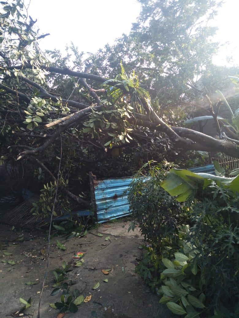 Butuh Perhatian Pemerintah Desa, Rumah Wargayang Roboh Tertimpa Pohon Akibat Angin Kencang