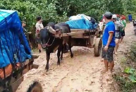 Kondisi Jalan Berlumpur, Pendistribusian Logistik Pilkada di 4 Desa Gunakan Gerobak Sapi