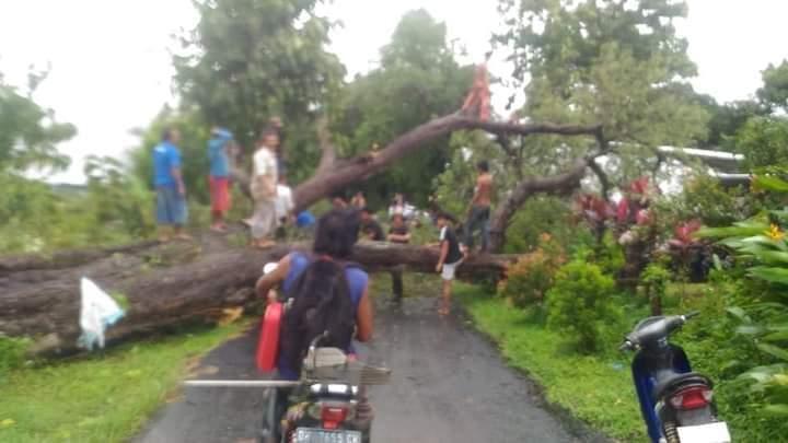 Angin KencangRobohkan Pohon Asem Usia Ratusan Tahun Timpa Bengkel