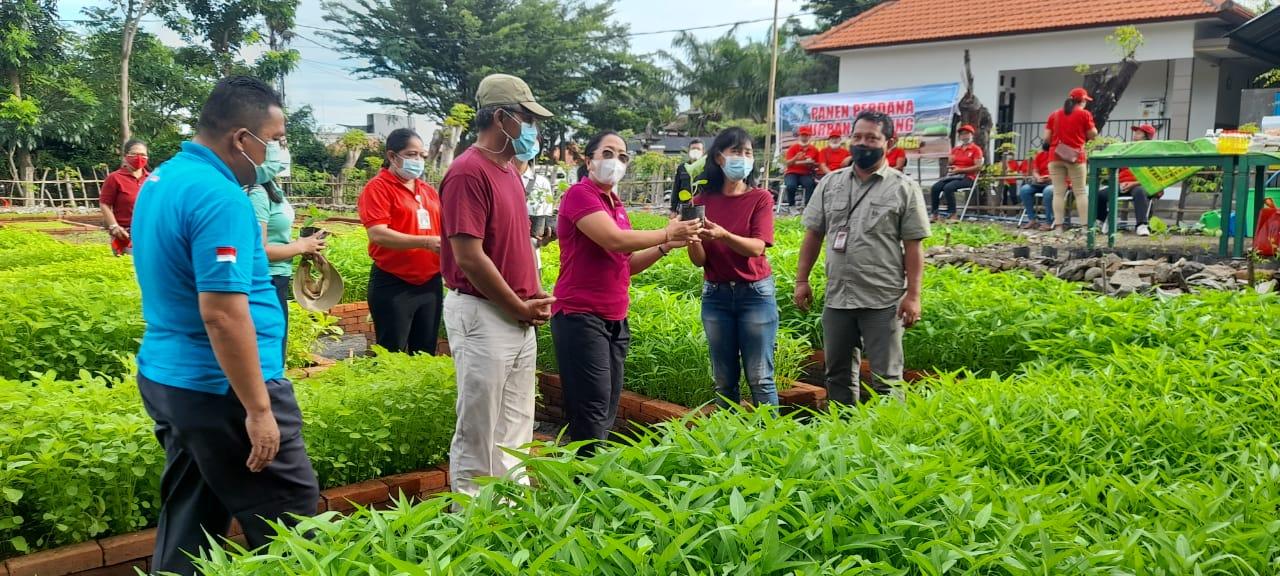Gusti Ayu Aries Sujati Hadiri Panen Perdana Urban Farming Pemdes Baktiseraga