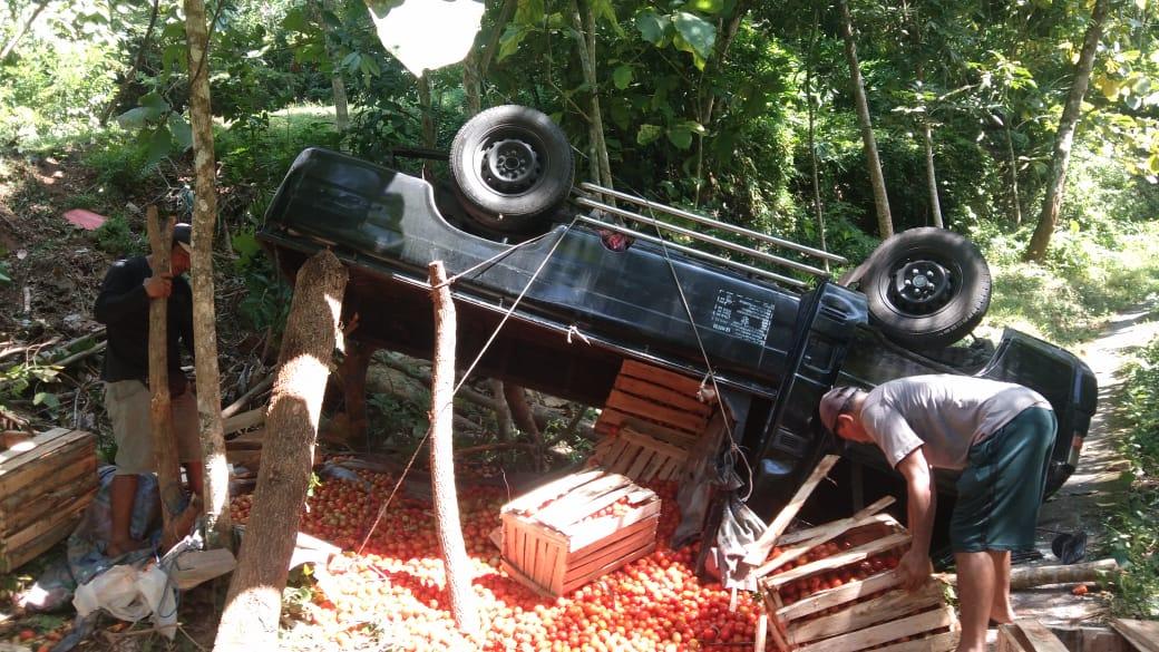 Mobil Pick Up Bermuatan Tomat Terbalik Dijalur Desa Cempaga