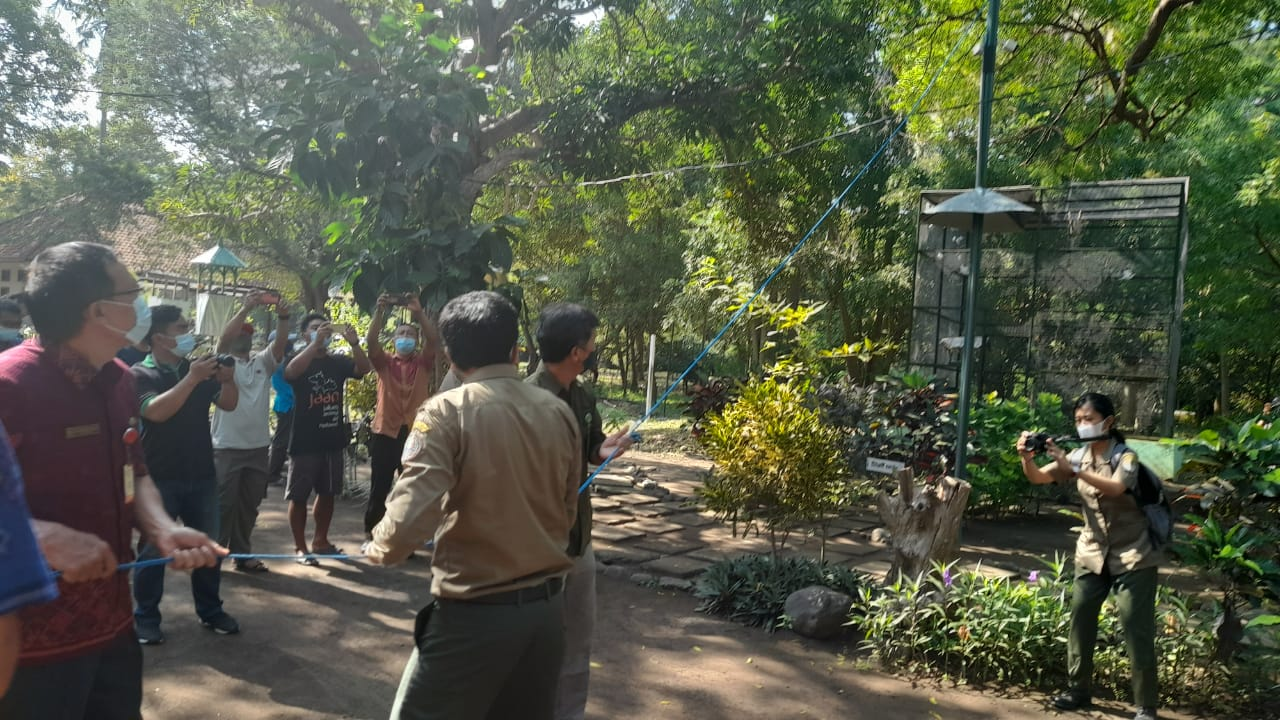Pengelola TNBB Lepas 54 Ekor Curik Bali Kehabitatnya Cegah Kepunahan