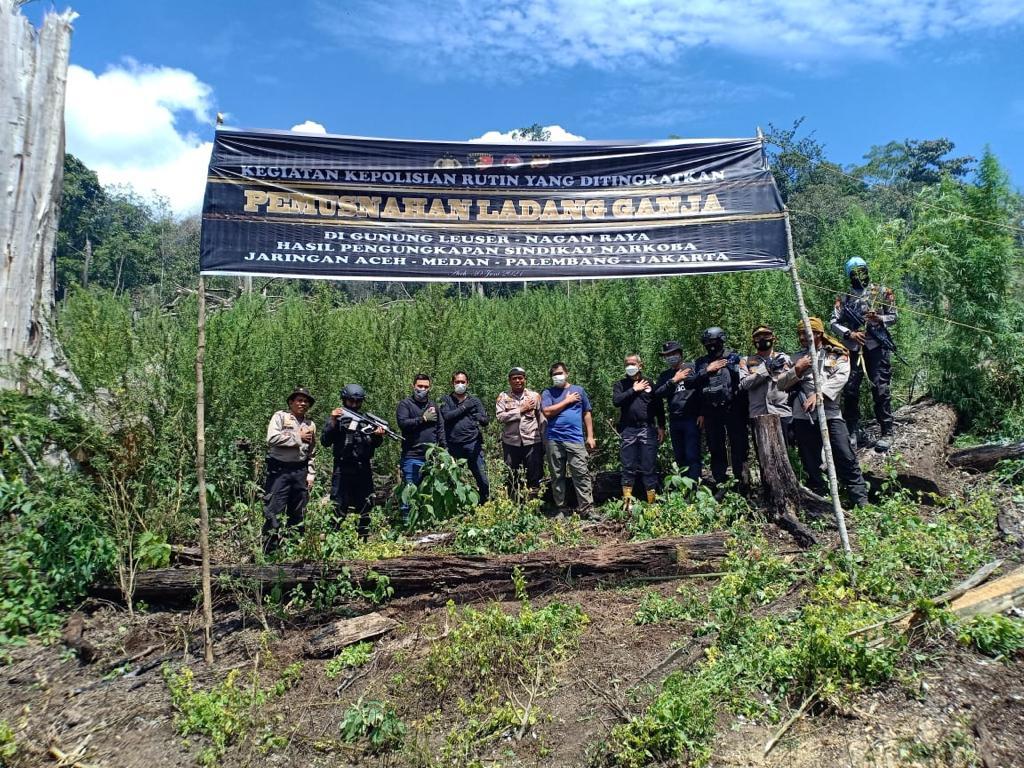 Bareskrim Musnahkan 7 Ha Ladang Ganja di Gunung Lauser, Sita 592 Kg Ganja Kering