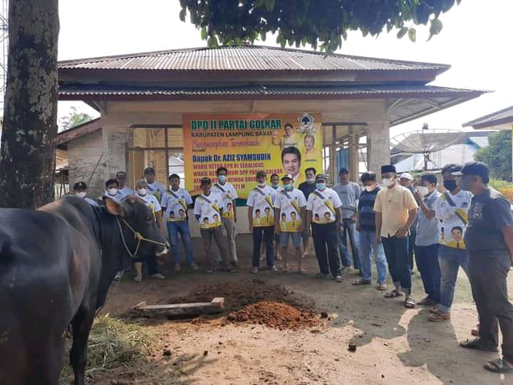 DPD II Golkar Kabupaten Lambar Sembelih 1 Sapi Qurban di Kantor Golkar Lambar